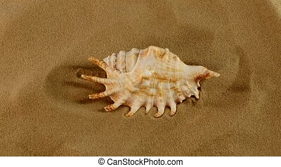 Top of marine seashell on sand, rotation, close up - Top of...