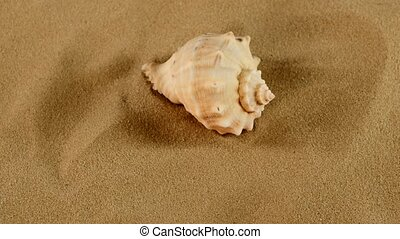 Top of usual marine seashell on sand, rotation, close up -...