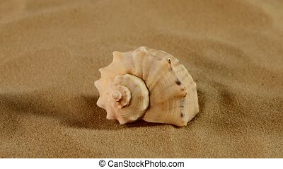 Side of usual marine seashell on sand, rotation, close up -...
