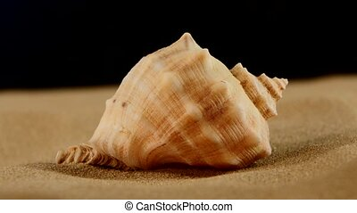 Usual marine seashell on sand, black, rotation, close up -...