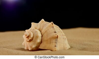 Unusual marine seashell on sand, black, rotation, close up -...