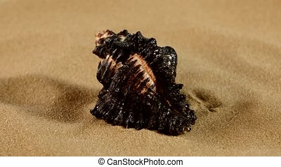 Unusual black marine seashell on sand, rotation, close up -...