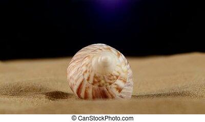 Unusual pink marine seashell on sand, rotation, close up