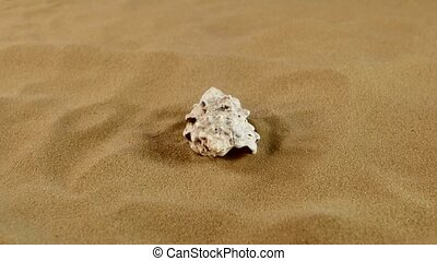 Beautiful seashells on sand background, rotation - Beautiful...