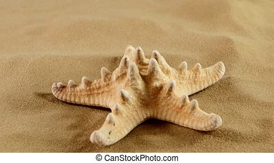 Starfish on sand, rotation - Usual starfish on sand,...