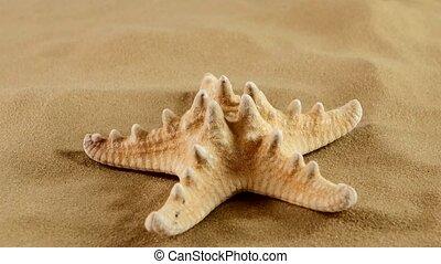 Starfish on sand, rotation - Usual starfish on sand,...