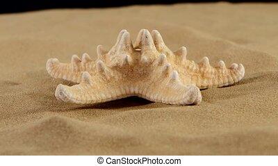 Starfish on sand, black, rotation - Usual starfish on sand,...