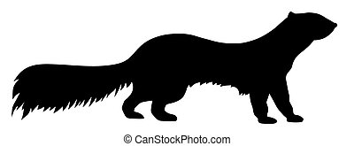 Polecat - Vector illustration of polecat silhouette