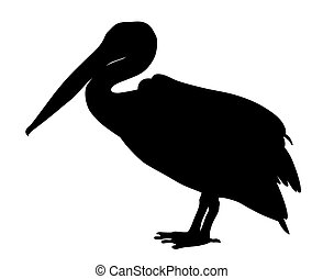 Pelican - Vector illustration of pelican silhouette
