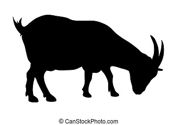 Goat - Vector illustration of goat silhouette