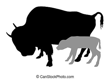 Buffalo - Vector illustration of buffalo and calf...