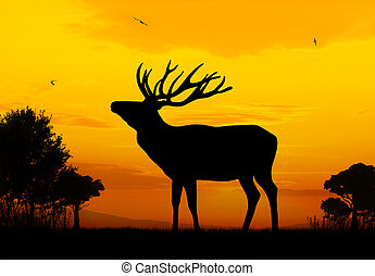 Deer - Male deer silhouette on sunset background