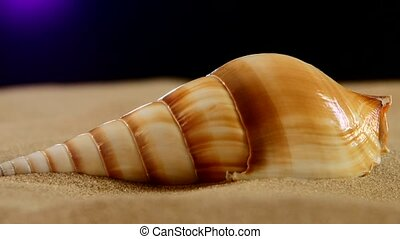 Brown sea shells with sand and back light, rotation, on...
