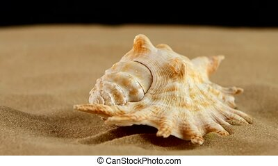 Light brown sea shells with sand and back light, rotation,...