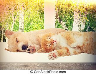 小貓, 小狗, 睡覺