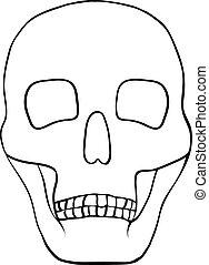 Illustration of a human skull.