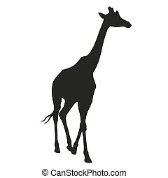 Giraffe vector isolated silhouette
