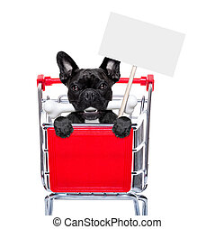 shopping cart dogs - french bulldog dog inside a shopping...