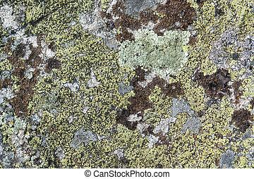 lichen - full frame abstract lichen background