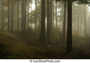 forest in fog 15