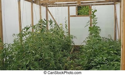 Small plastic covered greenhouse or hothouse interior...