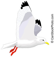 Red-legged Kittiwake - Rissa brevirostris