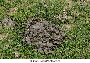 Dry cow manure - A close up shot of dry cow manure.