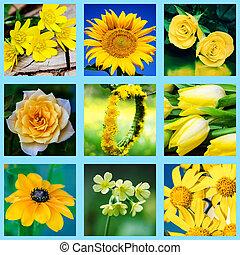 amarillo, flor, mezcla,