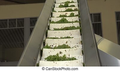 winding stairway to the press - the grapes are sent to the...