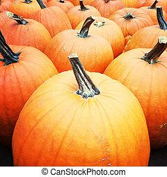 Big orange pumpkins - Big bright orange pumpkins at the...