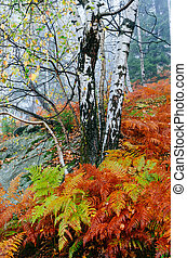 Autumn Landscape with ferns - Landscape in the autumn forest...