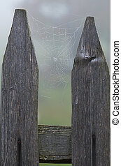 Cobweb on the fence - Cobweb with dew on a wooden fence