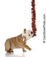 naughty little christmas helper - english bulldog