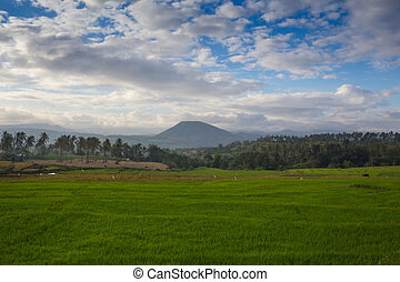 The Classic Cone Shape of Arenal Volcano in Costa Rica - The...