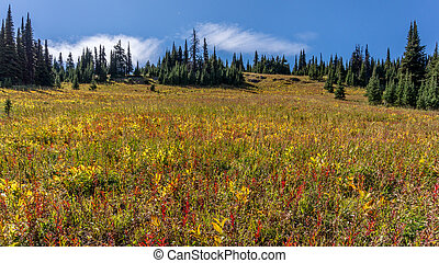 Alpine meadows in late summer