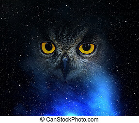 Eyes eagle owl in the night sky