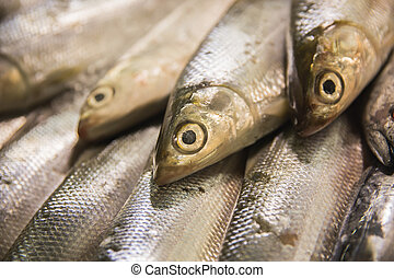 Fresh raw sardines in market stall - A portrait of fresh raw...