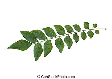 caril, folha, árvore, isolado, ligado, branca,