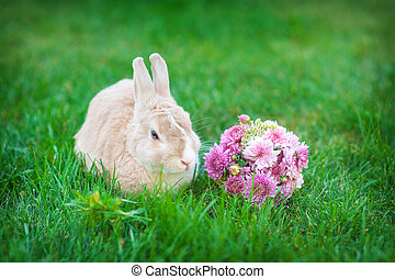 Easter bunny with bouquet of flowers in a meadow