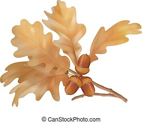 Vector autumn oak leaves - Oak autumn branch with leaves and...