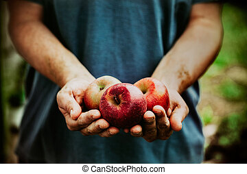 Farmer with apples - Organic fruit and vegetables. Farmers...