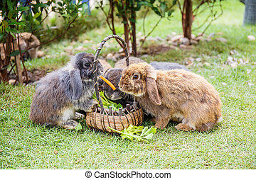Rabbits in the grass at garden