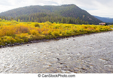 Fall on the Gallatin River. - Fall colors on the Gallatin...