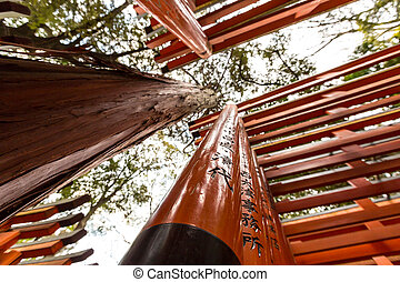 Torii gates - Thousands of vermilion torii gates at Fushimi...