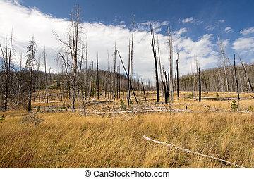 Scerene landscape of previously burnt forest. - Landscape of...