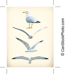Seagulls icons - Set with Seagulls  icons