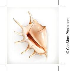 Seashell icon - Seashell, icon isolated on white background