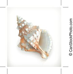 Tropical shell icon - Tropical shell, icon, isolated on...