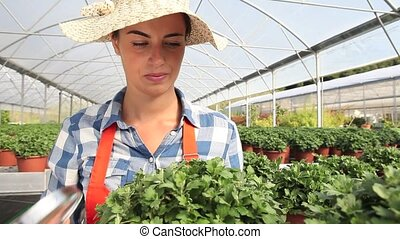 woman at work in greenhouse with magnifying glass, care...