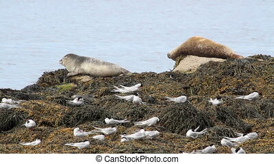 Seals on the shore - Beautiful steady shot of seals on the...
